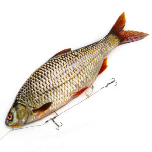Elastic Baitfish Release Rig
